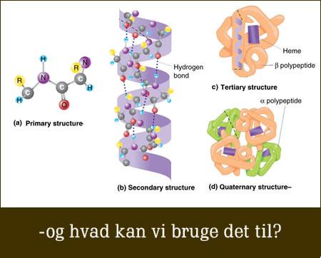 Hvad er proteiner ?
